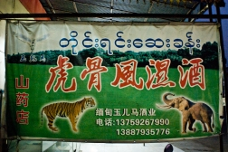 Sign for a specialty herbal and wildlife shop selling endangered forest animals in Mong La, Burma.