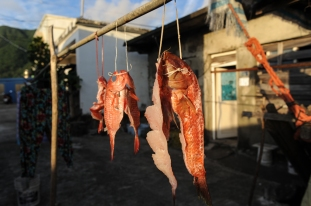 Fresh fish hung in the morning to dry overnight on Orchid Island, Taiwan. Dried fish are a staple of the Tao aboriginal diet. Residents worry about possible radioactive contamination in the surrounding waters and seafood.