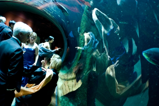 "Guest of the opening gala at the Academy of Sciences Museum in San Francisco gather in ""Flooded Amazon"" exhibit."